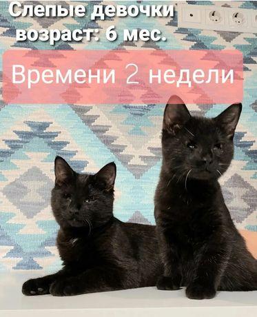 Слепые котят едут на смерть? Котята в приюте не выживают