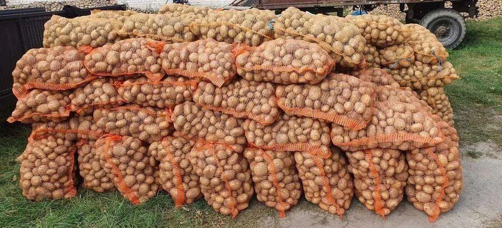 Sprzedam Pyszne Ziemniaki bez Sztucznych Nawozów Bryza,Gala,Tajfun :) Piotrków Trybunalski - image 1