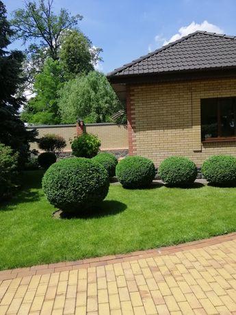Обрезка сада, формировка кустов, живой изгороди. Фигурная стрижка.