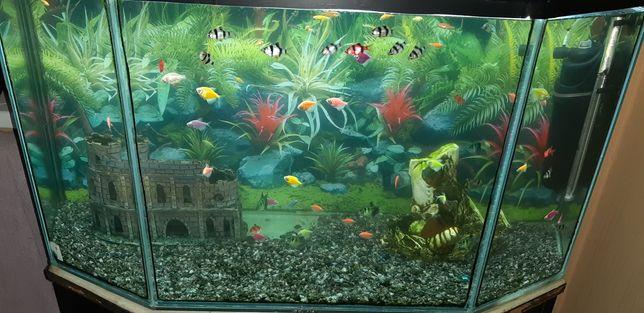 Продам аквариум 200л крышка тумба