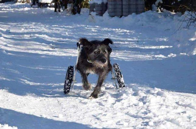 Bob - dzielny psiak szuka domu