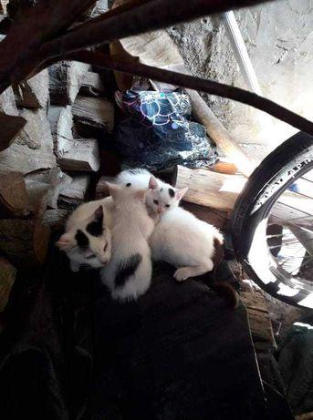 Gatinhos com cerca de 2 meses para adoção