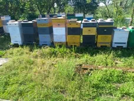 Sprzedam ule wielkopolskie z pszczołami ul pszczoły pasieka miód