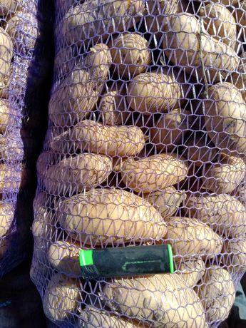 Продам посадочный картофель Гренада