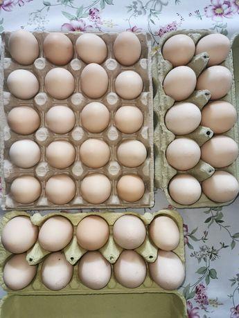 Świeże jajka z wolnego wybiegu