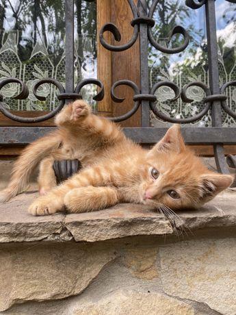 Віддам кошеня в добрі руки
