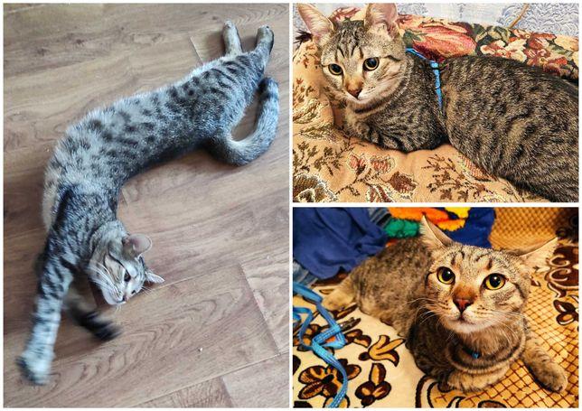 Мурчик, полосатый пятнистый кот, котик, 10 мес, кастрирован
