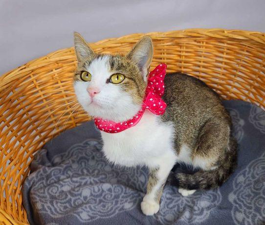Граціозна красуня Масяня, 1 рік, шукає сім'ю! кішка кіт кошка кот