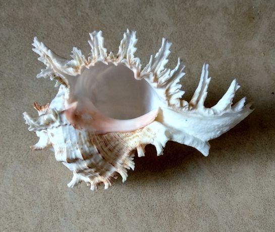 Ракушка со дна океана