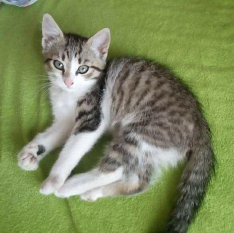 Śliczna koteczka pilnie potrzebuje domu
