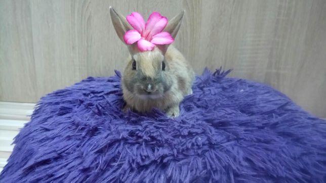Został ostatni! Młode króliczki miniaturki.