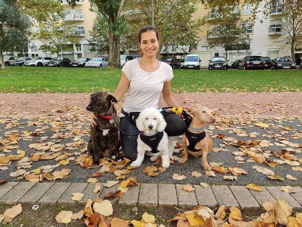 DogWalker/Passeador de Cães/Coimbra