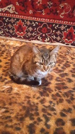 Котенок подросток девочка