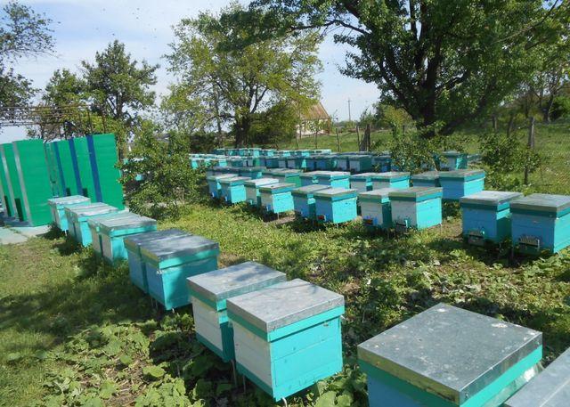 Продам улья, улей, улики, вулик для пчел