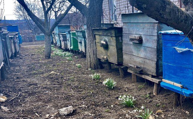 Продам бджолопакети (бджоли, пчелопакеты)