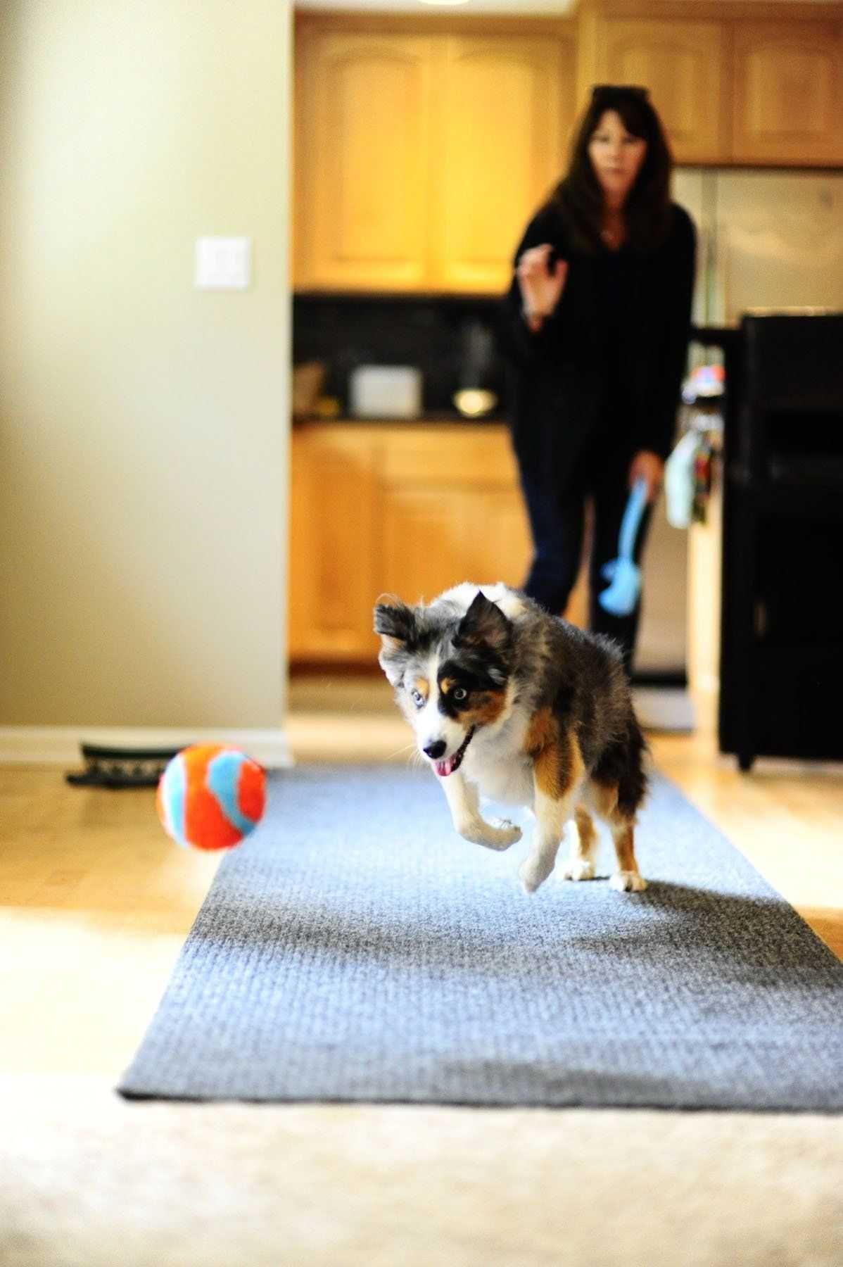 Chuckit! Indoor Ball, brinquedo interior em esponja - NOVO