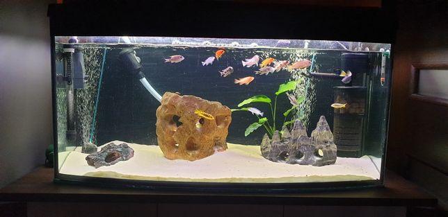 Akwarium 200L panoramiczne + komoda