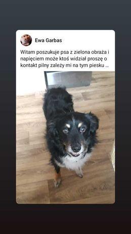 Proszę o pomoc chodzi o psa