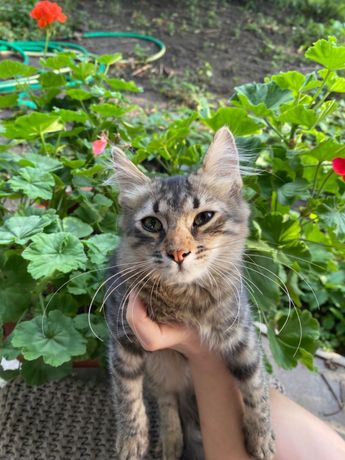 Котенок кошечка в заботливые руки