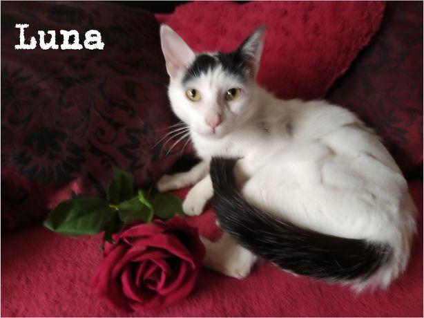 Gatinha Luna para adoção
