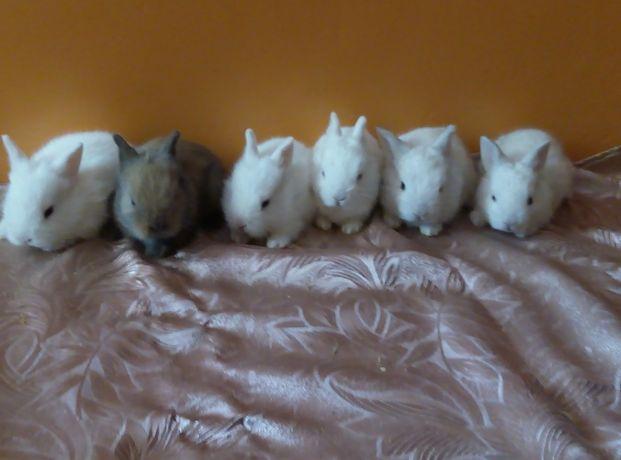 декорашки милашки кролики
