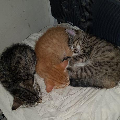 Kotki szukają nowych właścicieli