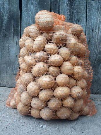 Ziemniak ziemniaki Gala Eko Ekologiczne Dowóz