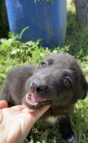 Маленькая собачка/щенок/собака/