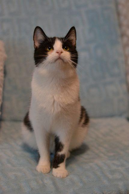 юна стерилізована кішка 8м