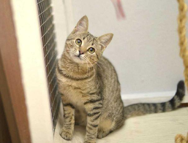 отдам котенка, девочка, ласкушка, 4,5 месяца