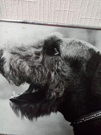 """Фото """"Собака - верный друг"""" 2"""