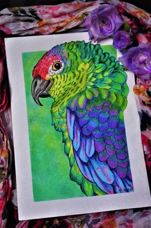 Papuga, rysunek, na zamówienie