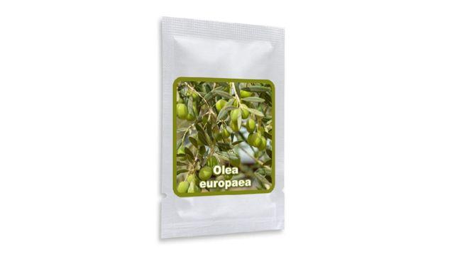 Sementes de Olivo - Olea Europea -arvore - bonsai- Azeitona
