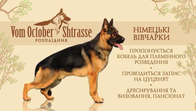 """Розплідник німецьких вівчарок """"VOM OCTOBER SHTRASSE"""", готель для собак"""