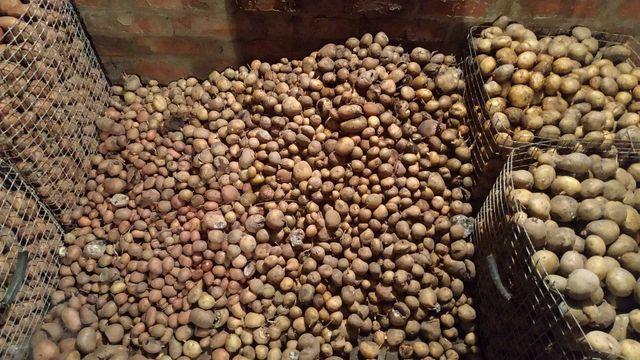 Картошка мелкая для корма скота