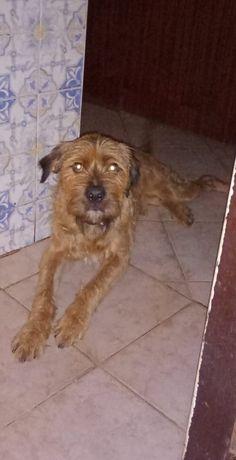 Adoção cão Boris