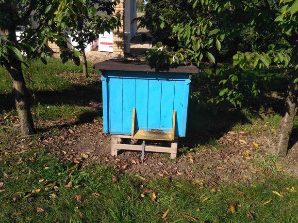 Ule warszawskie,pszczoły, ramki z suszem