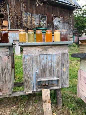 Pyłek pszczeli kwiatowy wrzos malina propolis  pszczeli miód naturalny