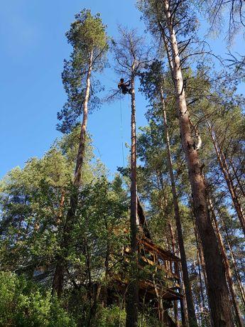 Ścinka drzew / wycinka drzew / wycięcie drzewa / Rębak do gałęzi