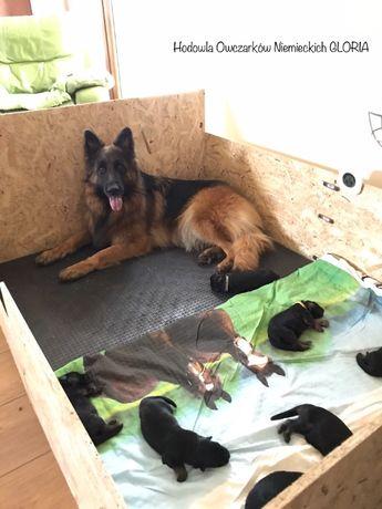 Maty dla psów do kojców boksów wybiegów kennel klatki