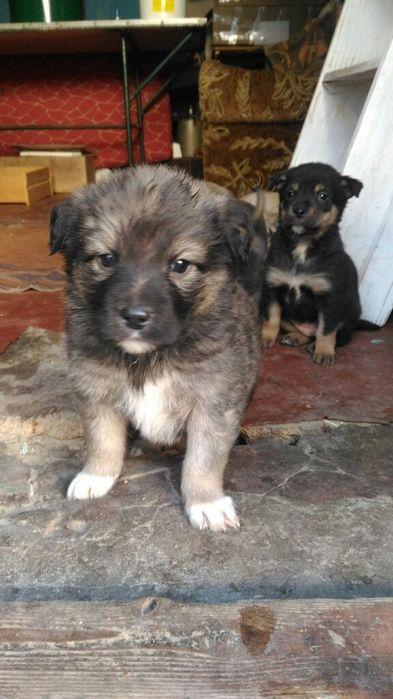 Подарю щенков (бывшедомашних) Херсон - изображение 1