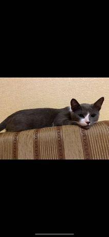 Пропал кот!!!Серого цвета