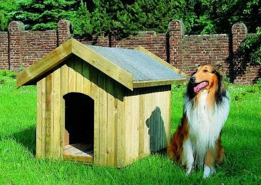 Buda dla dużego psa :)