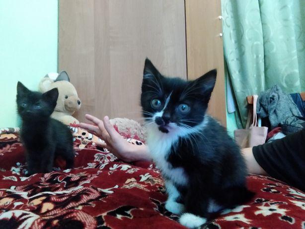 віддам котиків в хороші руки