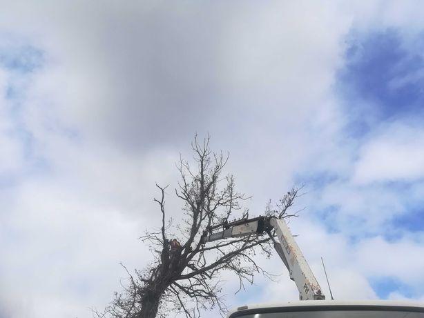 Serviço de giratória / Limpezas / Poda de Árvores