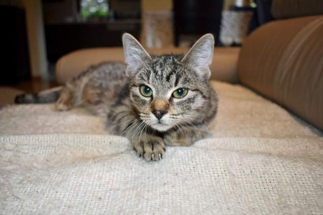 Grammi, kociczka szuka domu