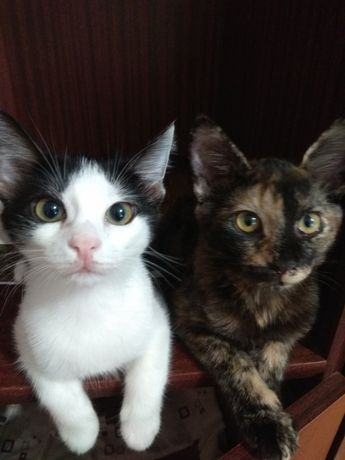 Две сестрички ждут свои семьи