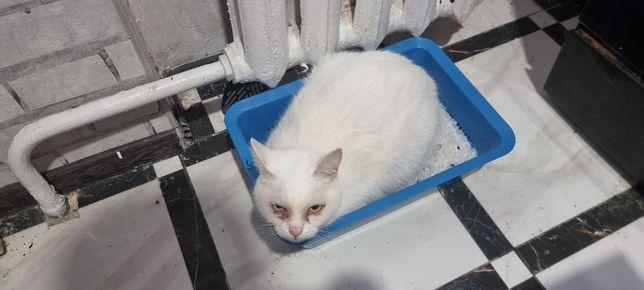 Кот Сніжок (Білий)