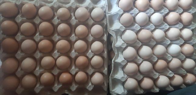 Яйцо столовое с2
