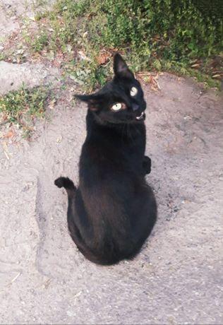 Отдам черную кошку , 2 года